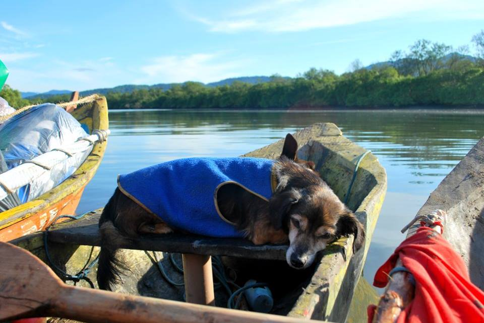 Viajante canino número 1: Bidu.