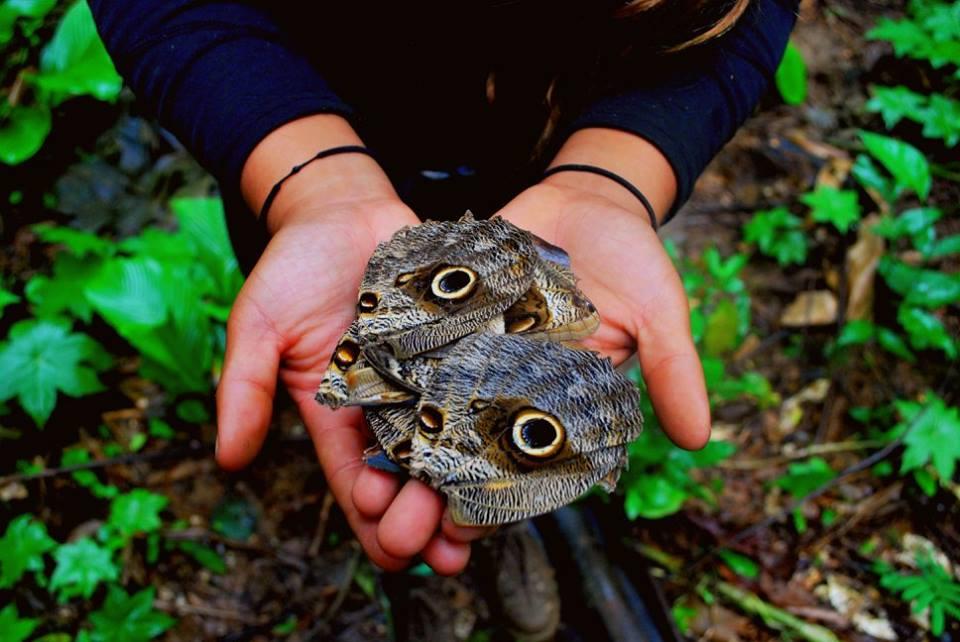 Borboletas encontradas no ninho de uma coruja numa casa abandonada no Rio dos Patos. Imagem: Yasmin Souza.