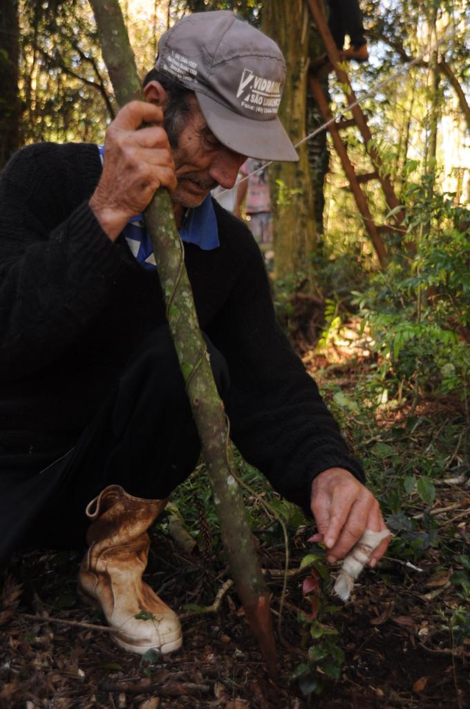 Tio Zé auxiliando no plantio planejado de frutíferas em meio à mata.