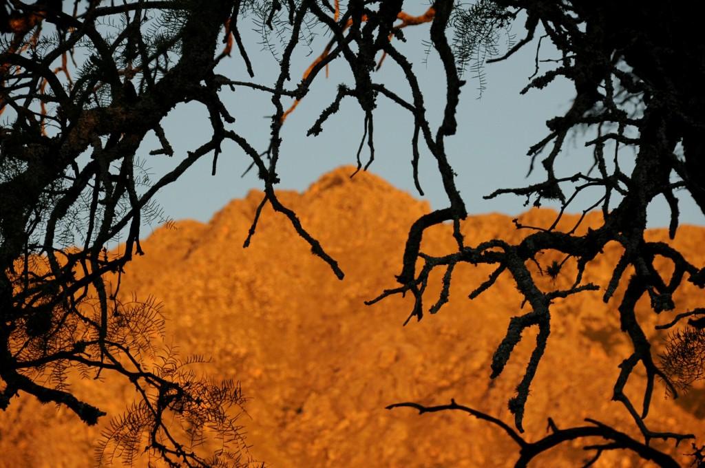 As serras iluminadas pelo por do sol e emolduradas pelos galhos do avô Algarrobo, árvore que deve ter cerca de 600 anos.